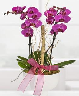 2 dallı nmor orkide  Polatlı anneler günü çiçek yolla