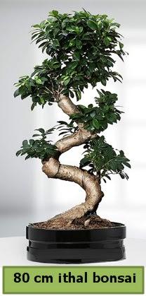 80 cm özel saksıda bonsai bitkisi  Polatlıya çiçek Ankara çiçekçi telefonları
