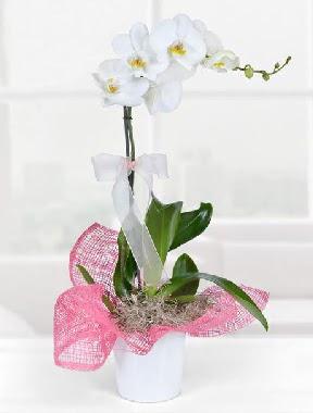 Tek dallı beyaz orkide seramik saksıda  Polatlıda çiçek firması çiçek gönderme