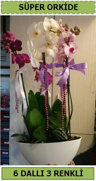 6 dallı 3 renk özel vazoda orkide çiçeği  Polatlı çiçek satışı