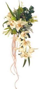 Orkidelerden gelin eli