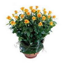 cicekciler , cicek siparisi  10 adet sari gül tanzim cam yada mika vazoda çiçek