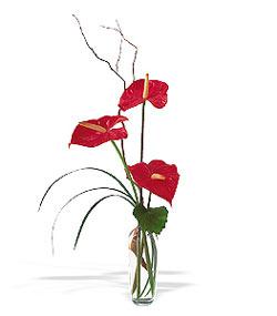 çiçek siparişi sitesi  cam yada mika Vazoda 3 adet  antoryum
