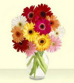 Polatlı çiçek yolla , çiçek gönder , çiçekçi   cam yada mika vazoda 15 özel gerbera