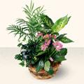 Polatlı çiçek satışı  5 adet canli çiçek sepette