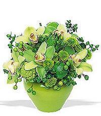 cam yada mika vazoda 5 adet orkide   Ankara Polatlı online çiçekçi , çiçek siparişi