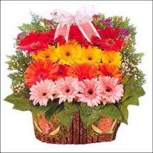 ahsap sepette gerberalar   çiçekçi mağazası