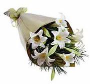 4 adet kazabllanka çiçegi   Polatlı çiçek gönderme sitemiz güvenlidir