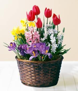 Polatlı anneler günü çiçek yolla  Sepet içerisinde karisik mevsim çiçekleri