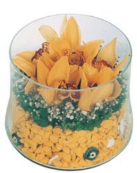 Polatlıdaki çiçekçiler  cam fanus içerisinde 3 adet kandil orkide