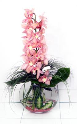 internetten çiçek siparişi  cam içerisinde tek dal orkide