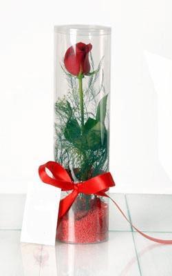 Ankara Polatlı çiçek yolla  Silindir vazoda tek kirmizi gül