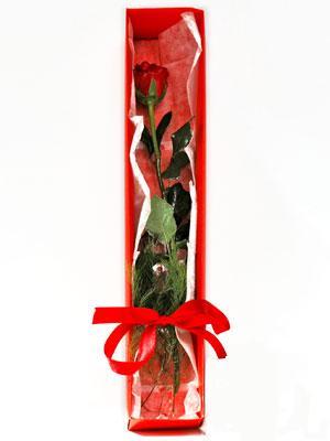 Polatlı yurtiçi ve yurtdışı çiçek siparişi  1 adet kutuda gül