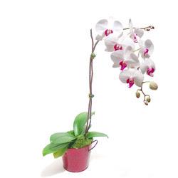 Polatlıda çiçek firması çiçek gönderme  Saksida orkide
