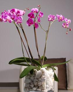 çiçek siparişi sitesi  2 dal orkide cam yada mika vazo içerisinde