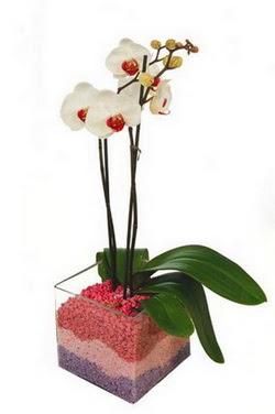 Polatlı uluslararası çiçek gönderme  tek dal cam yada mika vazo içerisinde orkide