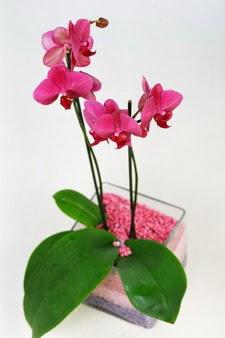 çiçekçi mağazası  tek dal cam yada mika vazo içerisinde orkide