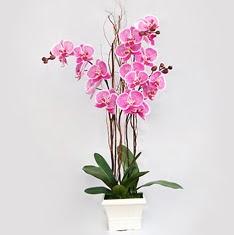 cicekciler , cicek siparisi  2 adet orkide - 2 dal orkide