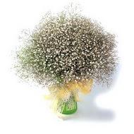 Polatlıya çiçek çiçek mağazası , çiçekçi adresleri  cam yada mika vazo içerisinde cipsofilya demeti