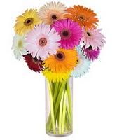 internetten çiçek siparişi  Farkli renklerde 15 adet gerbera çiçegi
