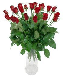 Polatlıya çiçek Ankara çiçekçi telefonları  11 adet kimizi gülün ihtisami cam yada mika vazo modeli