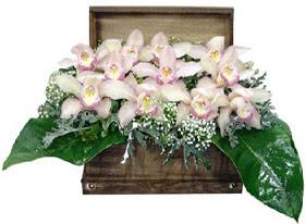 ucuz çiçek gönder  sandik içerisinde 1 dal orkide