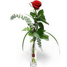 14 şubat sevgililer günü çiçek  Sana deger veriyorum bir adet gül cam yada mika vazoda