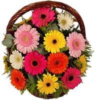 Sepet içerisinde sicak sevgi çiçekleri  Polatlı Ankara hediye çiçek yolla