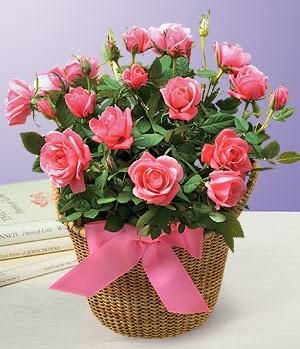 Anneme 12 adet sepet içerisinde kirmizi gül  Polatlıda çiçek firması çiçek gönderme