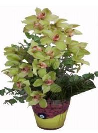 14 şubat sevgililer günü çiçek  cam vazo içerisinde 2 dal orkide çiçegi