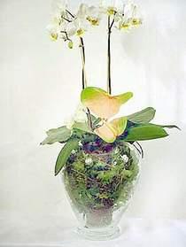 Polatlı çiçek satışı  Cam yada mika vazoda özel orkideler