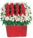 Polatlıda çiçek firması çiçek gönderme  Kare cam yada mika içinde kirmizi güller - anneler günü seçimi özel çiçek