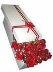 Polatlıya çiçek Ankara çiçekçi telefonları  11 adet 1.kalite magnum güller