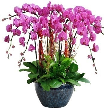 9 dallı mor orkide  14 şubat sevgililer günü çiçek