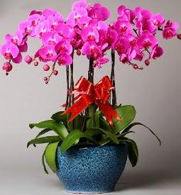 7 dallı mor orkide  Polatlı çiçek online çiçek siparişi