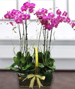 4 dallı mor orkide  Polatlıda çiçekçi güvenli kaliteli hızlı çiçek