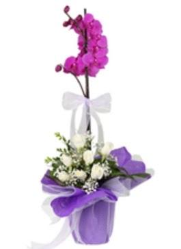1 dal mor orkide ve 11 adet beyaz gül  14 şubat sevgililer günü çiçek