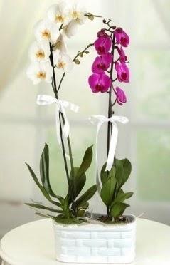 1 mor 1 dal beyaz İthal orkide sepet içerisinde  Polatlıya çiçek çiçek mağazası , çiçekçi adresleri