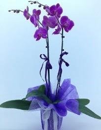 2 dallı mor orkide  Ankara Polatlı Ankara kaliteli taze ve ucuz çiçekler