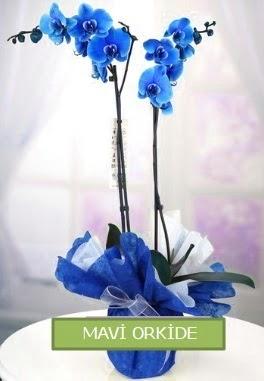 2 dallı mavi orkide  Polatlıdaki çiçekçiler