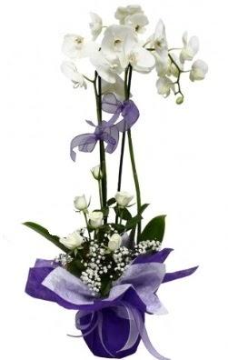 2 dallı beyaz orkide 5 adet beyaz gül  çiçekçi mağazası