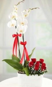 2 dallı beyaz orkide ve 7 kırmızı gül  Polatlı Ankara hediye çiçek yolla