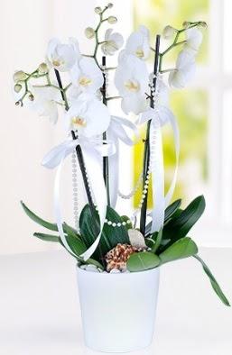 3 dallı beyaz orkide  Ankara Polatlı çiçek yolla