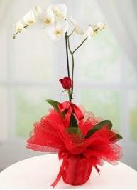 Tek dal beyaz orkide tek dal kırmızı gül  Polatlı internetten çiçek satışı