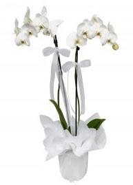 2 dallı beyaz orkide  Polatlıda çiçekçi güvenli kaliteli hızlı çiçek