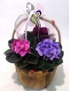 Sepet içerisinde 3 adet menekşe  Polatlı anneler günü çiçek yolla