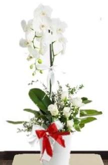 Tek dallı beyaz orkide 5 beyaz gül çiçek siparişi sitesi