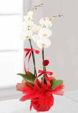 2 dallı beyaz orkide ve 1 adet kırmızı gül  Polatlı anneler günü çiçek yolla