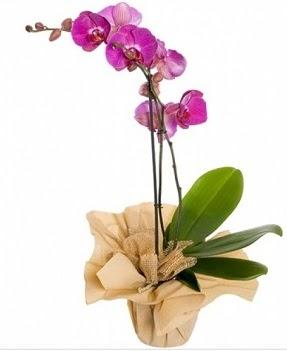 Tek dal mor orkide  Polatlı çiçek gönderme sitemiz güvenlidir
