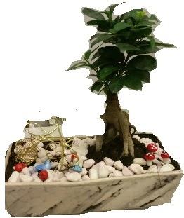 Japon ağacı bonsai satışı  Polatlı anneler günü çiçek yolla